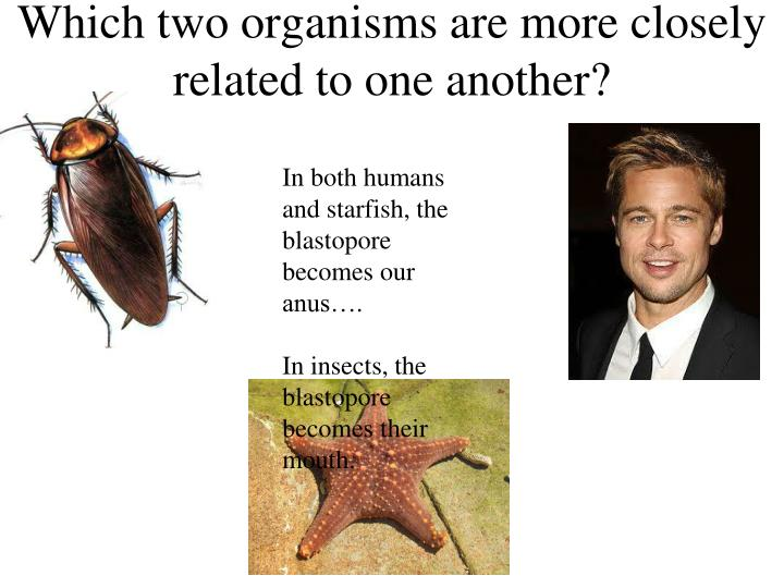Which two organisms are more closely related to one another?