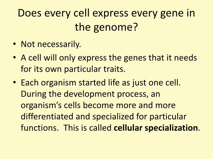 Does every cell express every gene in the genome?