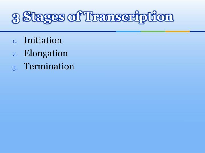 3 Stages of Transcription
