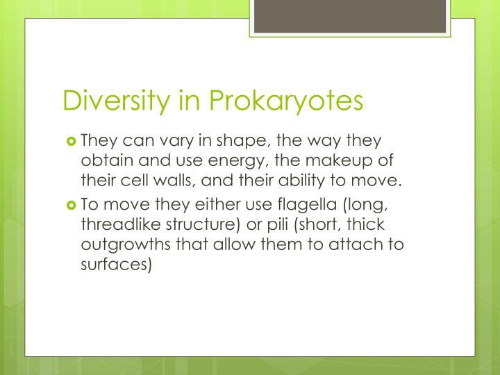 Diversity in Prokaryotes