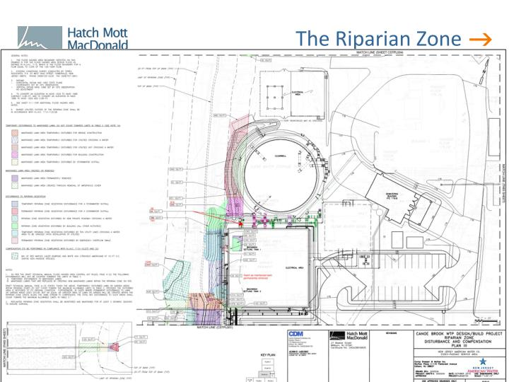 The Riparian Zone