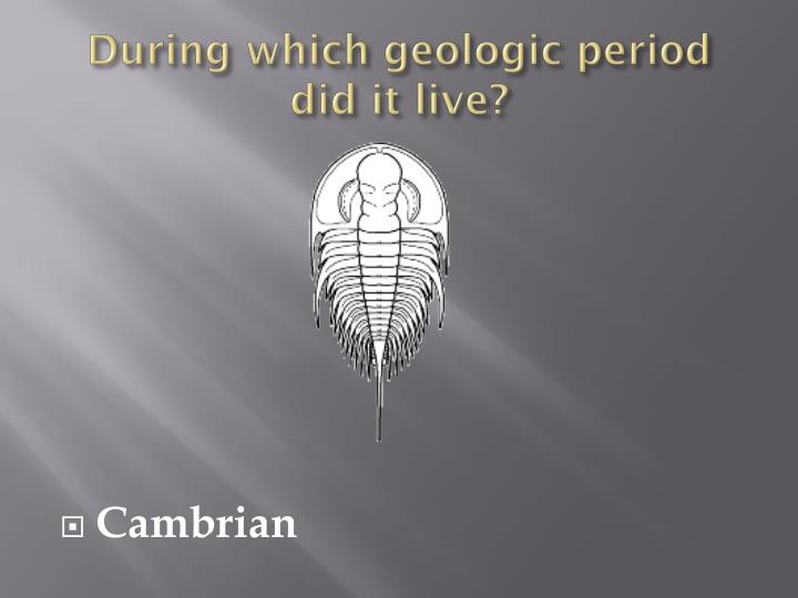 During which geologic period did it live?
