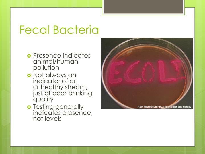 Fecal Bacteria