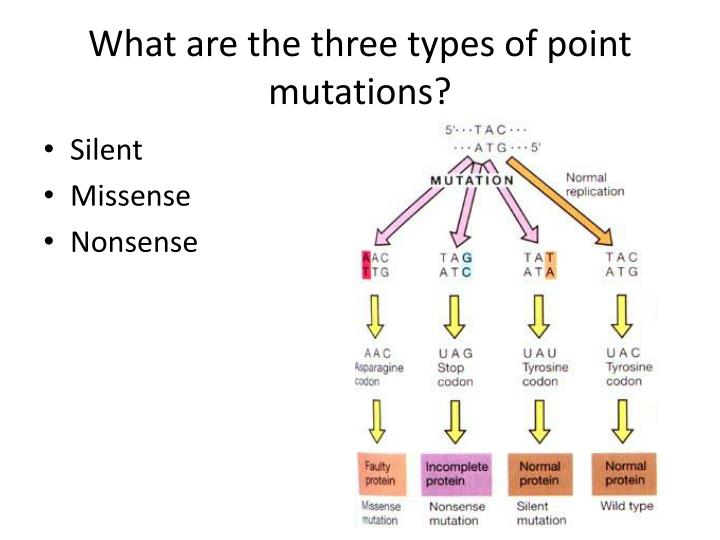 What are the three types of point mutations?