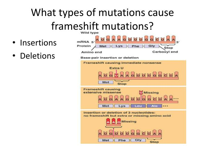 What types of mutations cause