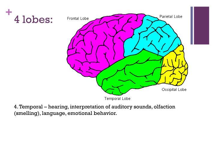 4 lobes: