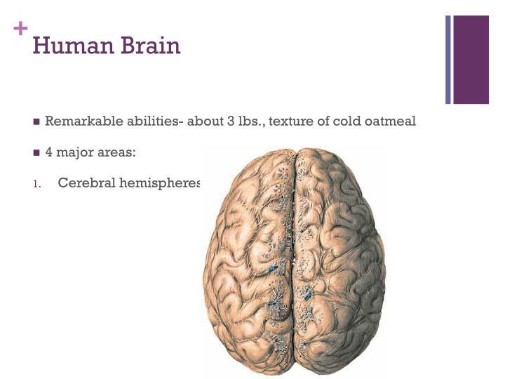 Human brain1