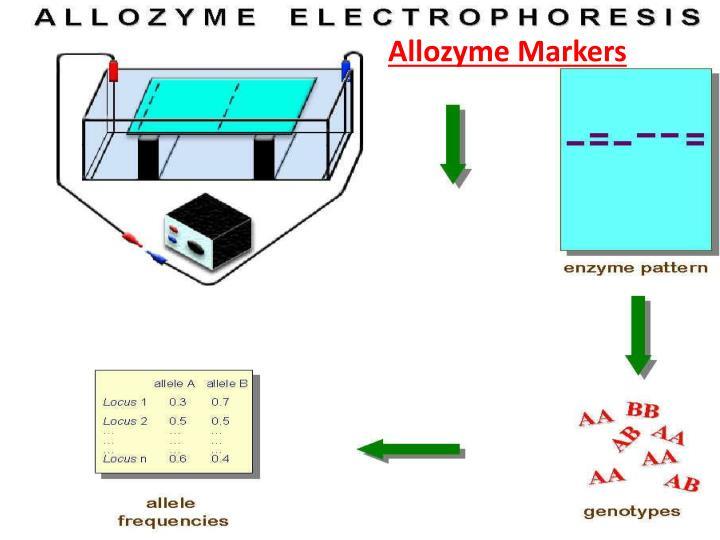 Allozyme markers