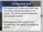 the mustard seed4