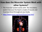 how does the muscular system work with other systems1