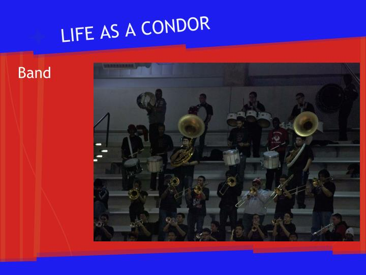 LIFE AS A CONDOR