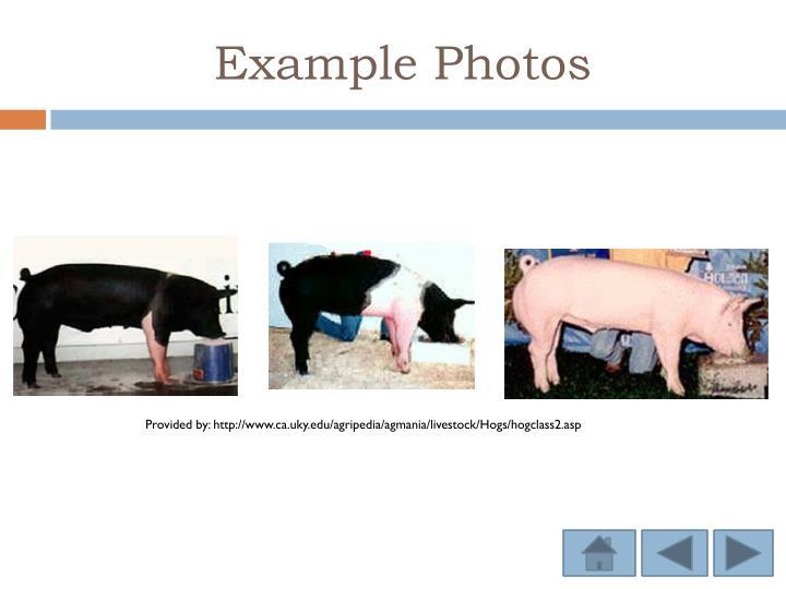 Example Photos