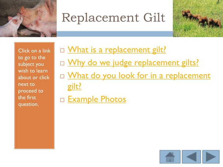 Replacement Gilt