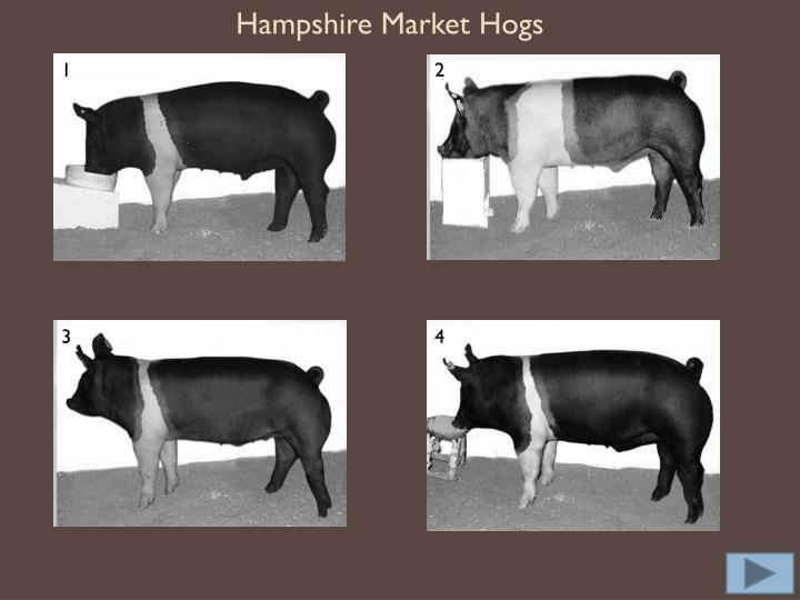 Hampshire Market Hogs