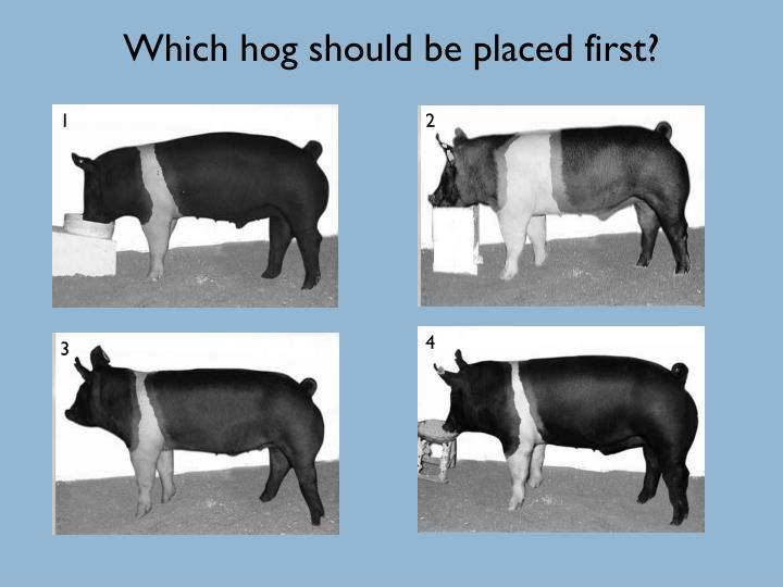 Which hog should be placed first?