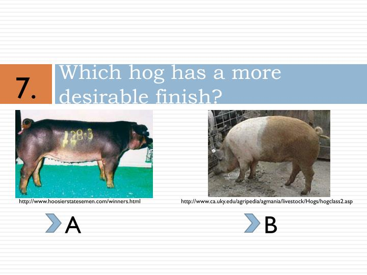 Which hog has a more desirable finish?