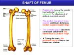 shaft of femur1