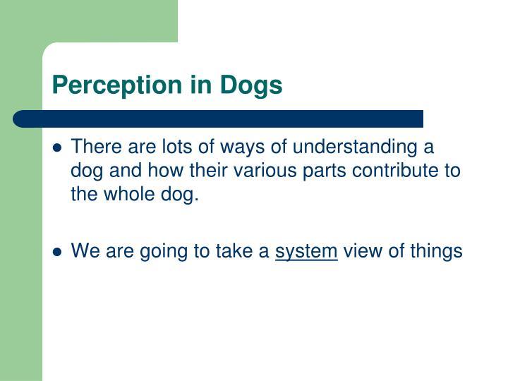 Perception in dogs1