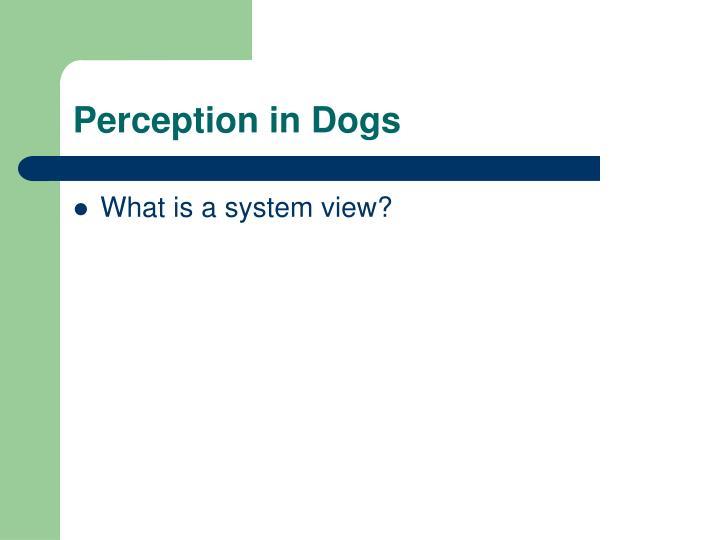 Perception in dogs2