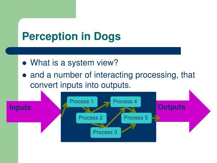 Perception in Dogs