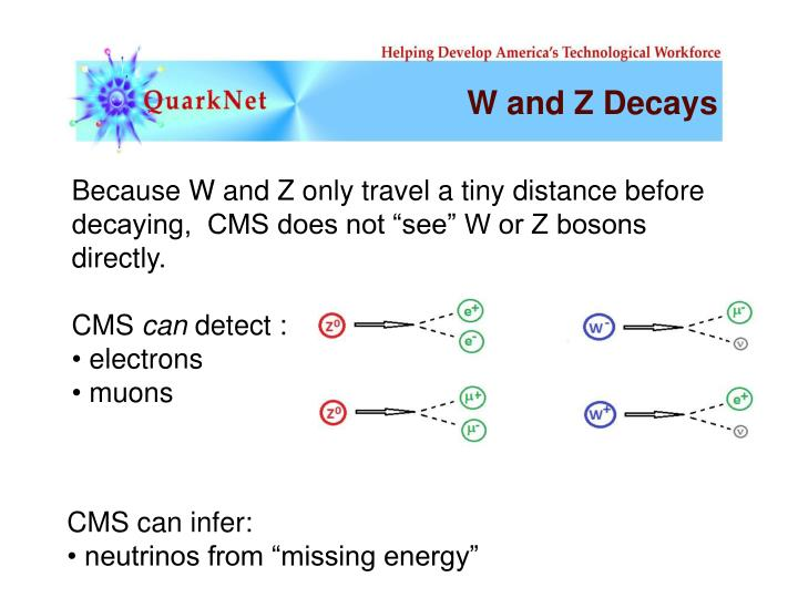 W and Z Decays