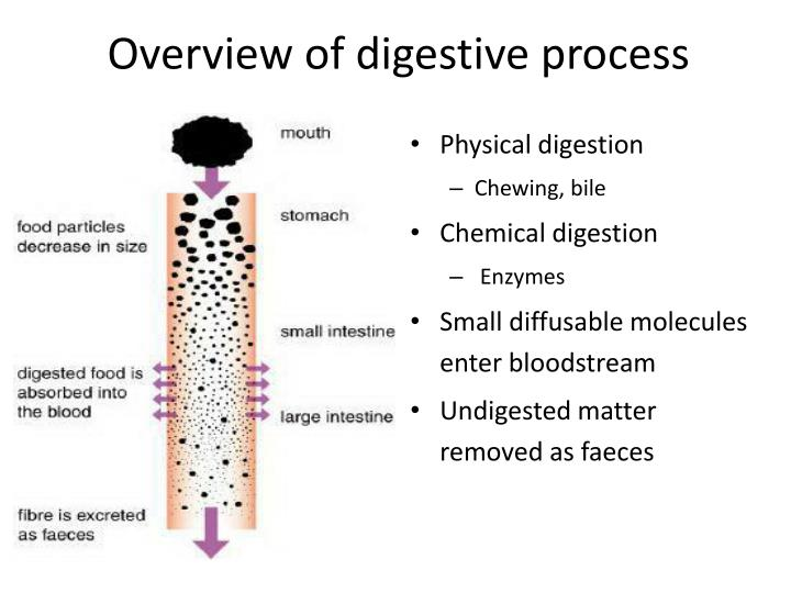 Overview of digestive process