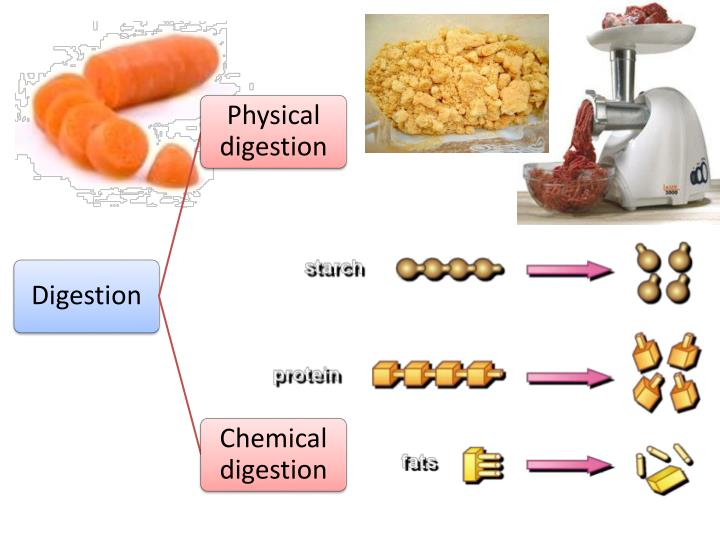 Physical digestion