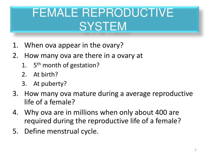 Female reproductive system