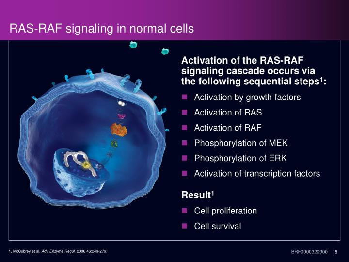 RAS-RAF signaling in normal cells