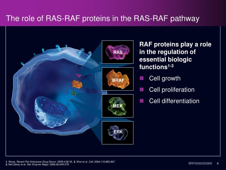 The role of RAS-RAF proteins in the RAS-RAF pathway