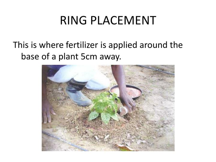 RING PLACEMENT