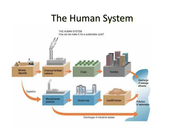 The human system1