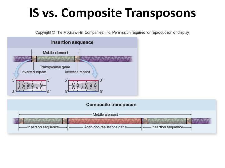 IS vs. Composite Transposons
