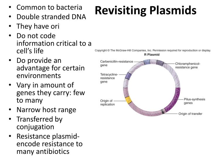 Revisiting Plasmids