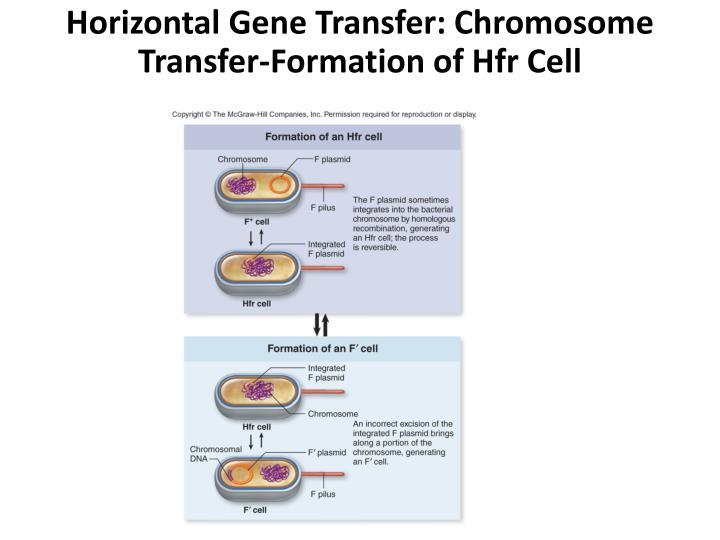 Horizontal Gene Transfer: Chromosome Transfer-Formation of