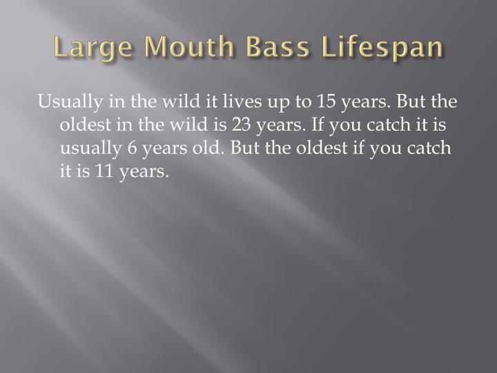 Large Mouth Bass Lifespan