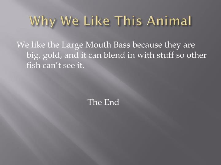 Why We Like This Animal