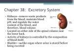 chapter 38 excretory system1