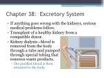 chapter 38 excretory system2