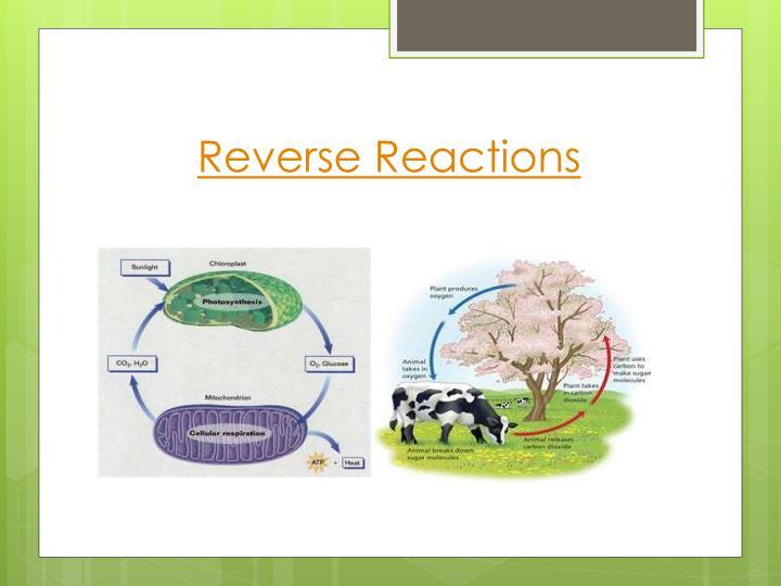 Reverse Reactions