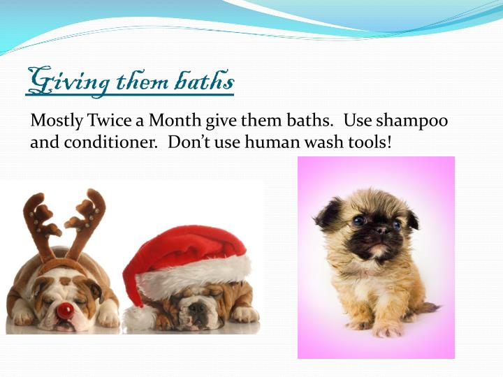 Giving them baths
