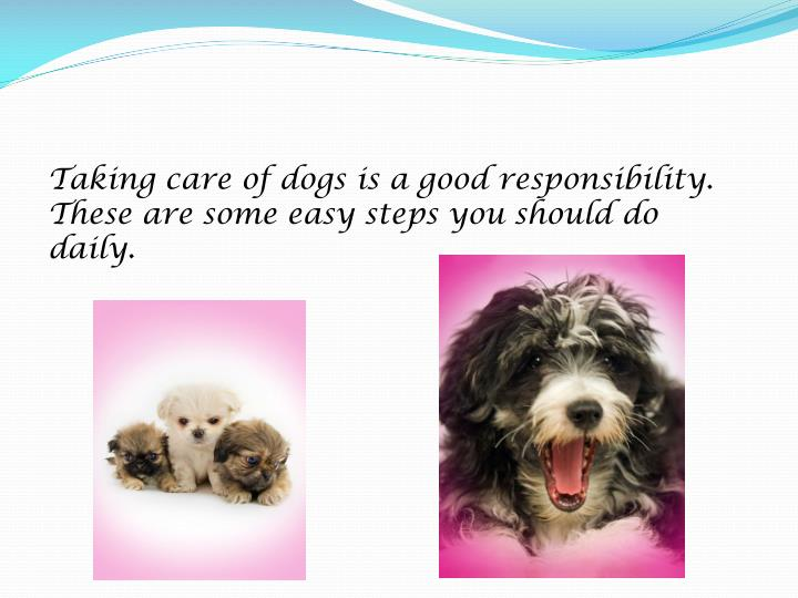 Taking care of dogs is a good responsibility.  These are some easy steps you should do daily.