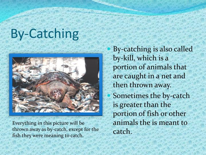 By-Catching