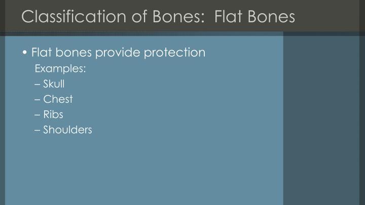 Classification of Bones:  Flat Bones