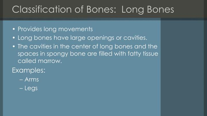 Classification of Bones:  Long Bones