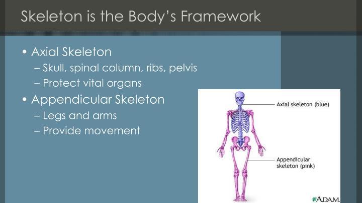 Skeleton is the body s framework