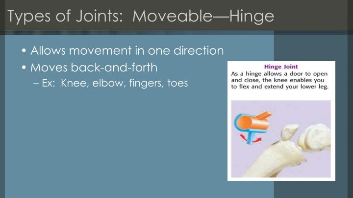 Types of Joints:  Moveable—Hinge