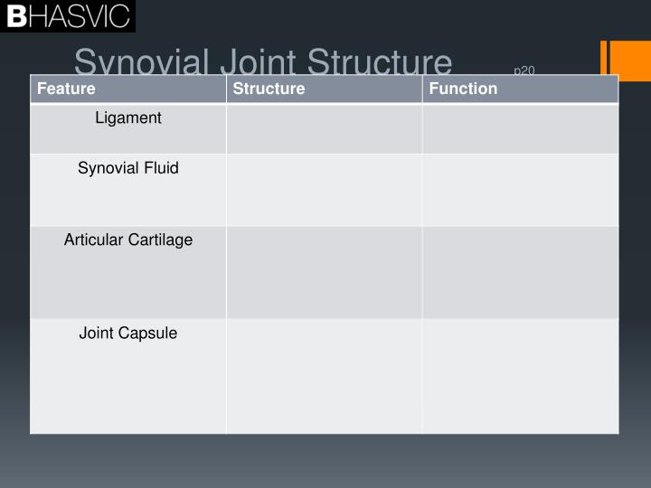 Synovial joint structure p20