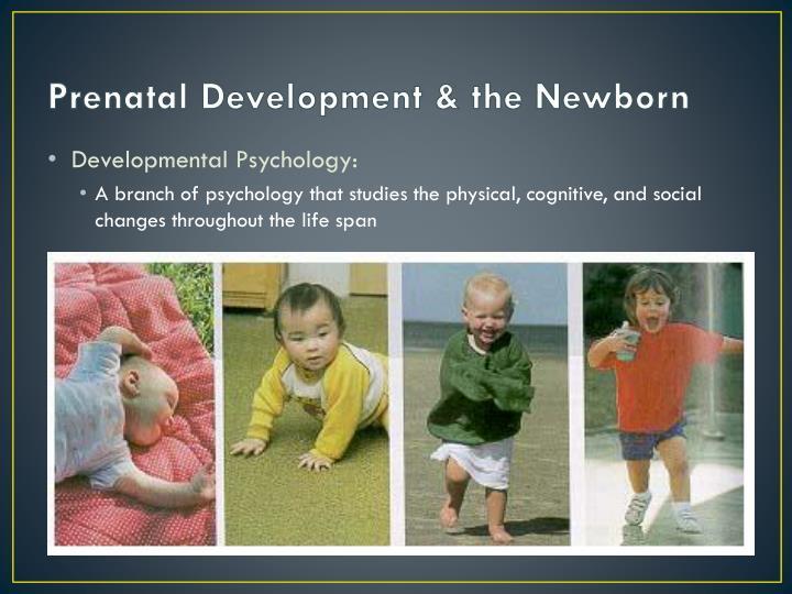 Prenatal development the newborn