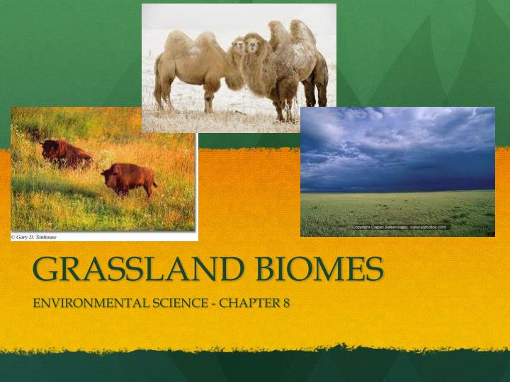 grassland biome abiotic features Biome: a grouping of terrestrial ecosystems on a given continent that are similar in vegetation structure, physiognomy, features of the environment and characteristics of their animal communities formation: a major kind of community of plants on a.